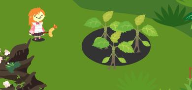 チェリートリエントの幼木